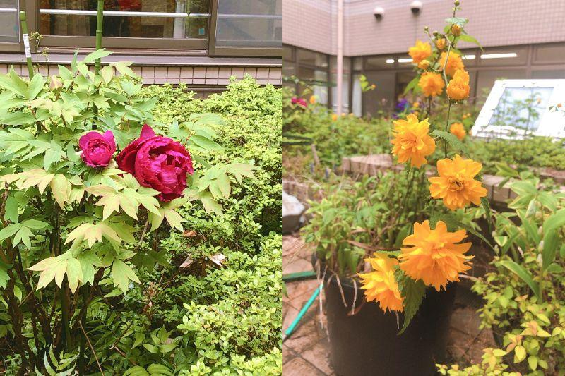 中庭お花.jpg